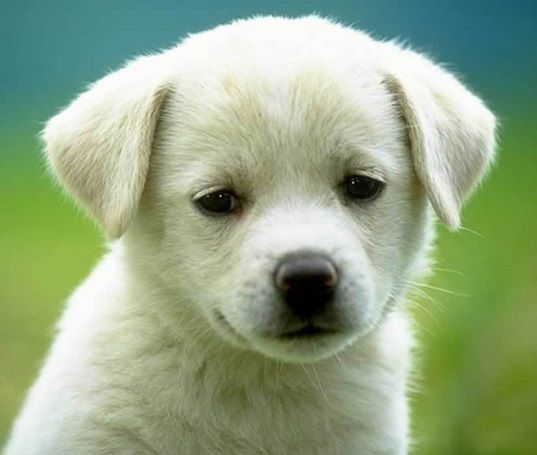 Pet Stores Near Me Http Www Rosyandrocky Com Https Www