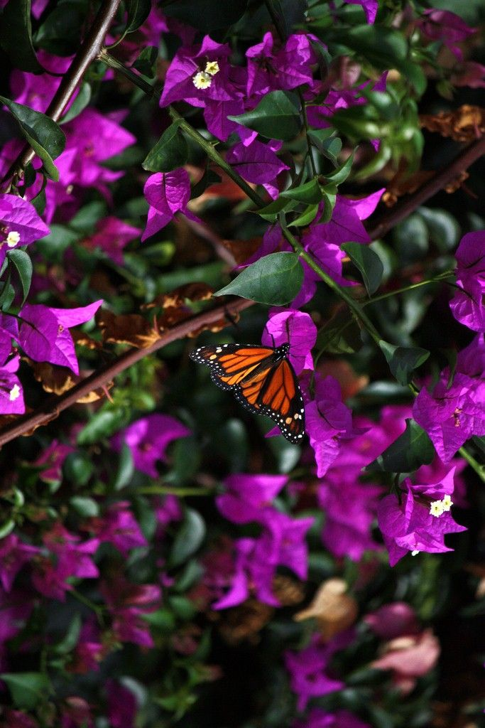 Pin De Ethics Resource Group En Butterflys Naturaleza Animales