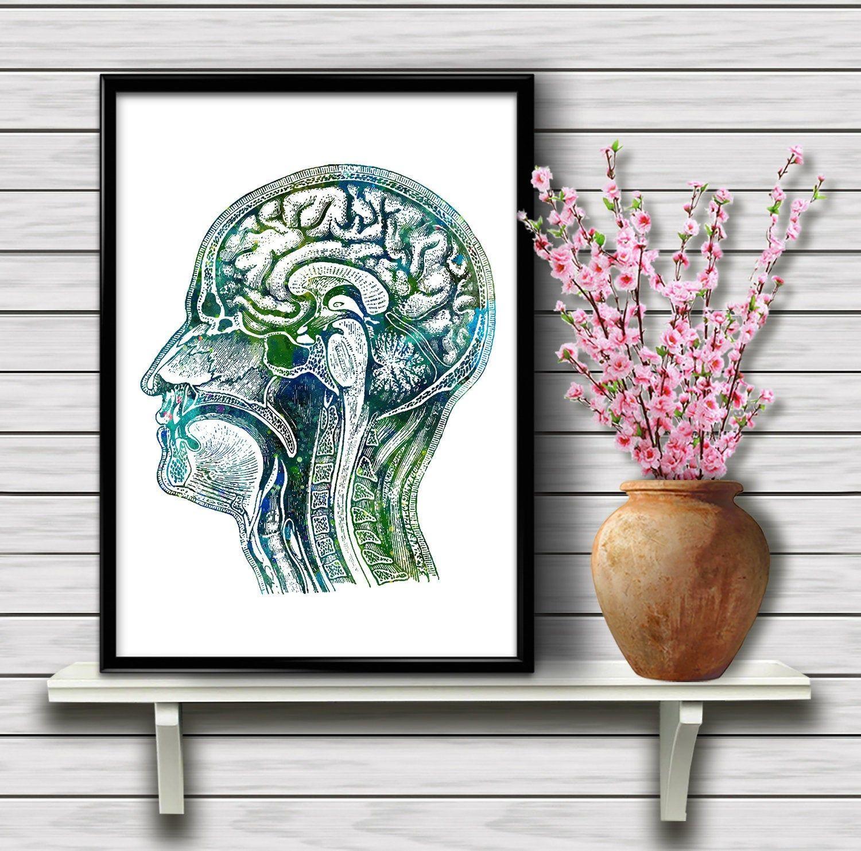 Human Head Anatomy, Brain longitudinal section, Biology ...