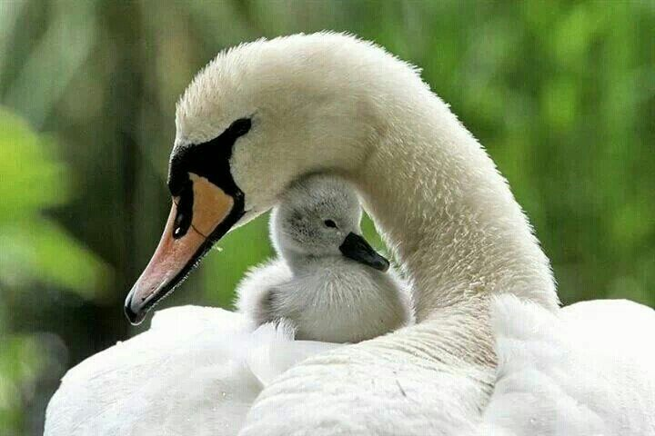Mother and her baby