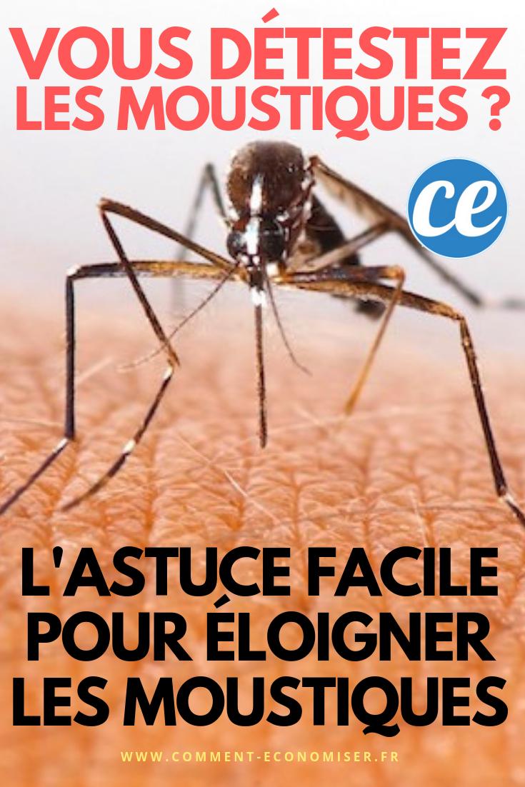 Comment Éloigner Les Fourmis Naturellement marre des moustiques ? ce truc facile les empêchera de