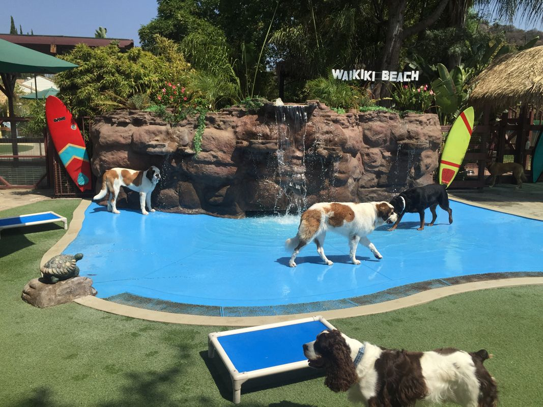 Paradise Ranch Pet Resort Cage Free Dog Boarding In Los Angeles
