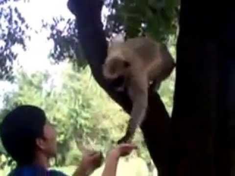 R U Man OR Monkey ?????