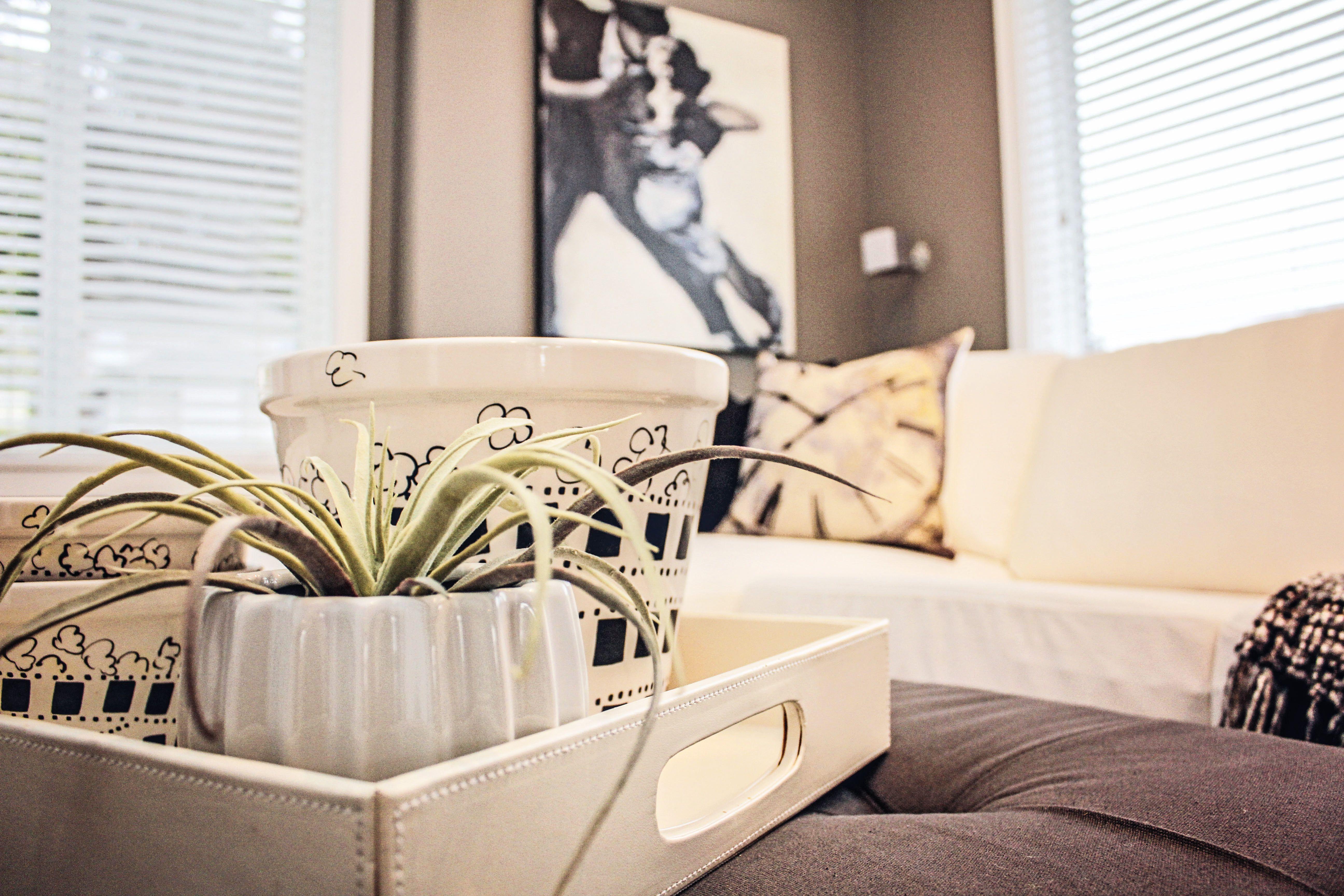 #Interiordesignphotography, #clean, #white, #modern, #plant, #Victoria, #BC, #Canada, #victoriabc #victoriaphotography #vancouverisland #bcphotographer, #karaphotography