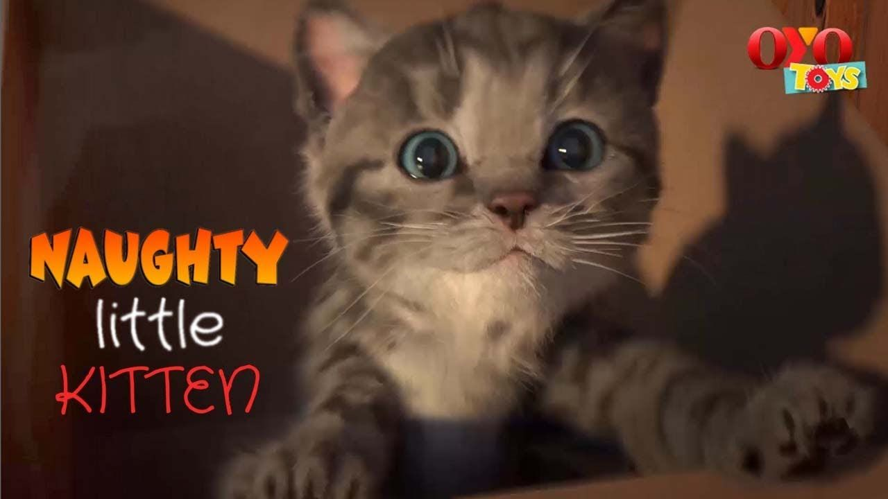 Naughty Little Kitten Meowing Adventures Fun Little Kittens Need A Home Little Kittens Amazing Adventures Play Doh Fun