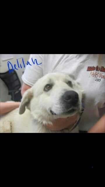 Delilah 2 Years Old Coming To Stapleton Petsmart April 30th Email Adoption Paasvinita Com For More Information Www Paasvinita Com Dogs Puppies Adoption Animals