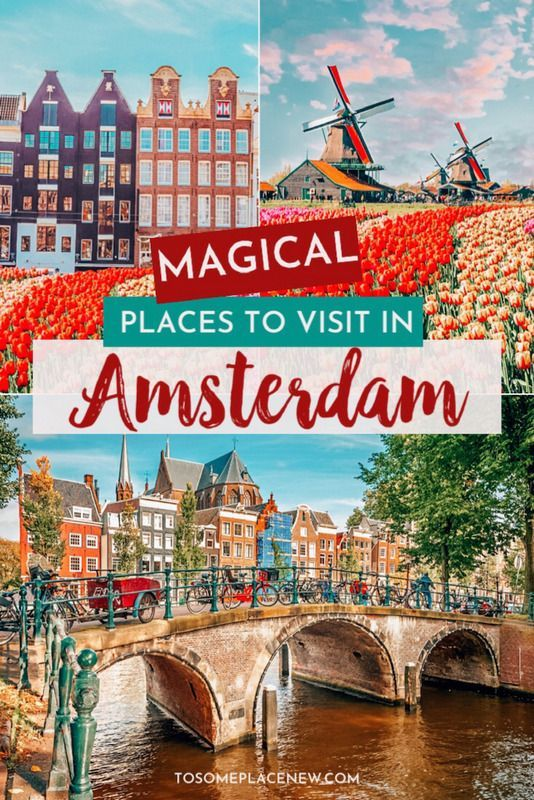 Amsterdam travel things to do | Amsterdam Netherlands beautiful places | Amsterdam travel itinerary 2 days |  Amsterdam red light district tulips canal windmills Van Gogh Anne Frank Houses Coffee Shop | Amsterdam travel tips and guide  #amsterdam #amsterdamtravel #europetravel
