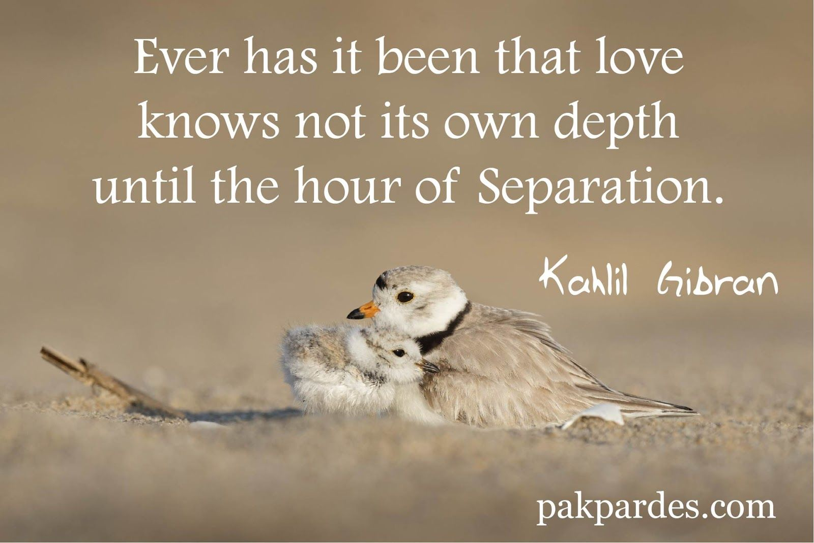 Ever Has It Been That Love Knows Not Its Own Depth Until The Hour Of Separation Kahlil Gibr Movie Love Quotes Love Quotes With Images Beautiful Love Quotes