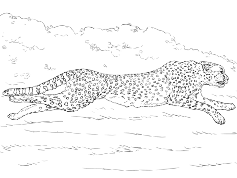Running Cheetah Coloring Page Free Printable Coloring Pages Animal Coloring Pages Coloring Pages Free Printable Coloring Pages