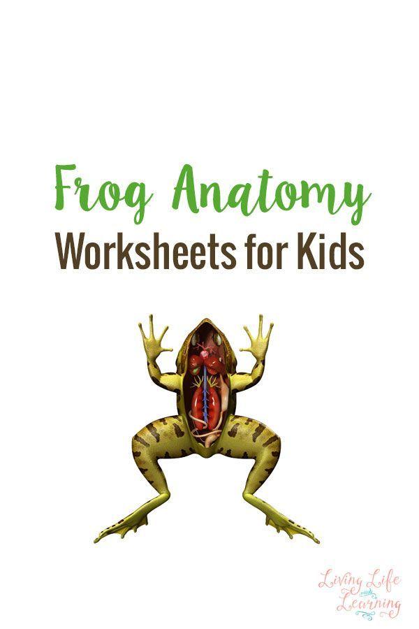 Frog Anatomy Worksheets For Kids Biology For Kids