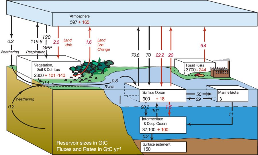 Carbon Cycle Diagram From The Ipcc