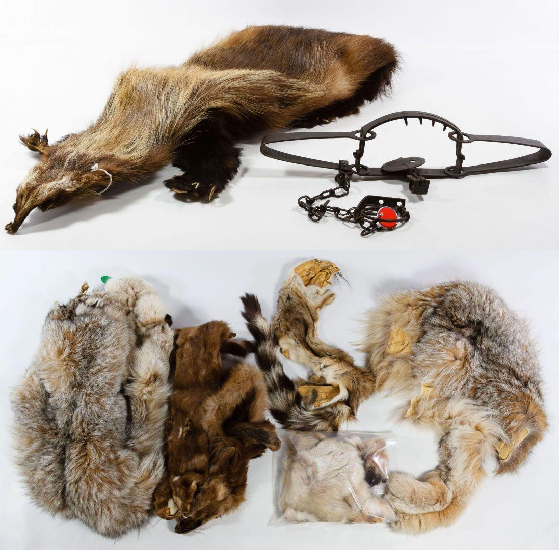 Lot 310: Wolverine, Lynx, Mink Pelt Assortment; Including an ... for Lynx Pelt  54lyp