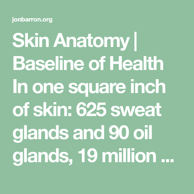 Skin Anatomy Baseline Of Health In One Square Inch Of Skin 625