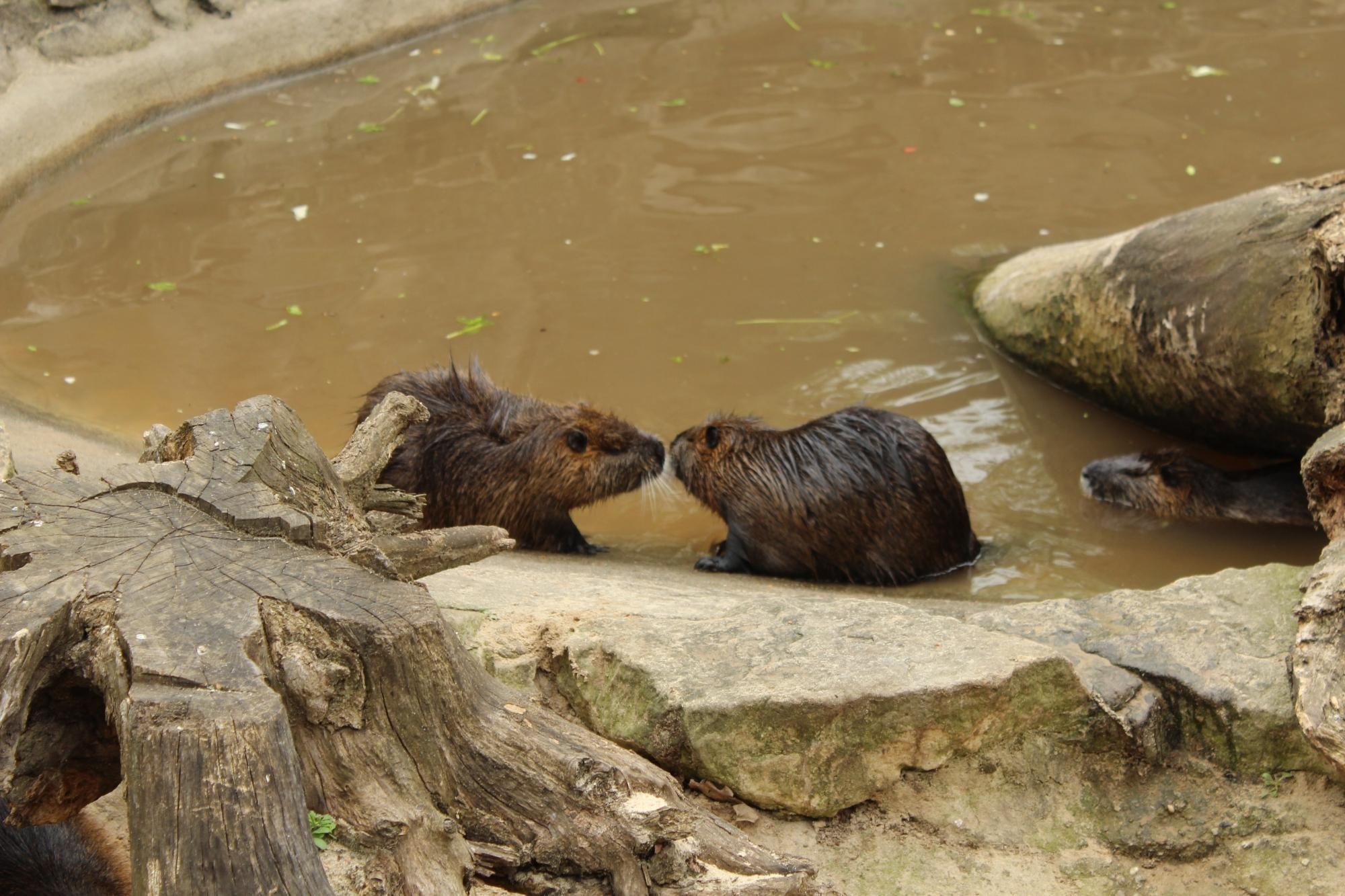 Zoologischer Garten Berlin Zoo Zoo Trip Advisor Endangered Animals