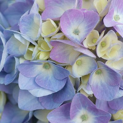 Gardening Tip The Nitrogen In Coffee Grounds Can Help Fertilize Plants That Require Acidic Soil Such As Roses And Hydrangeas