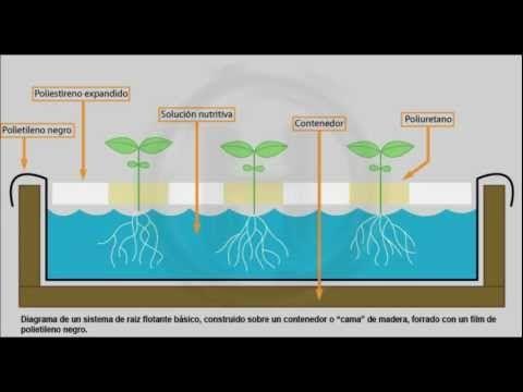cultivo de espinaca hidroponica - Buscar con Google