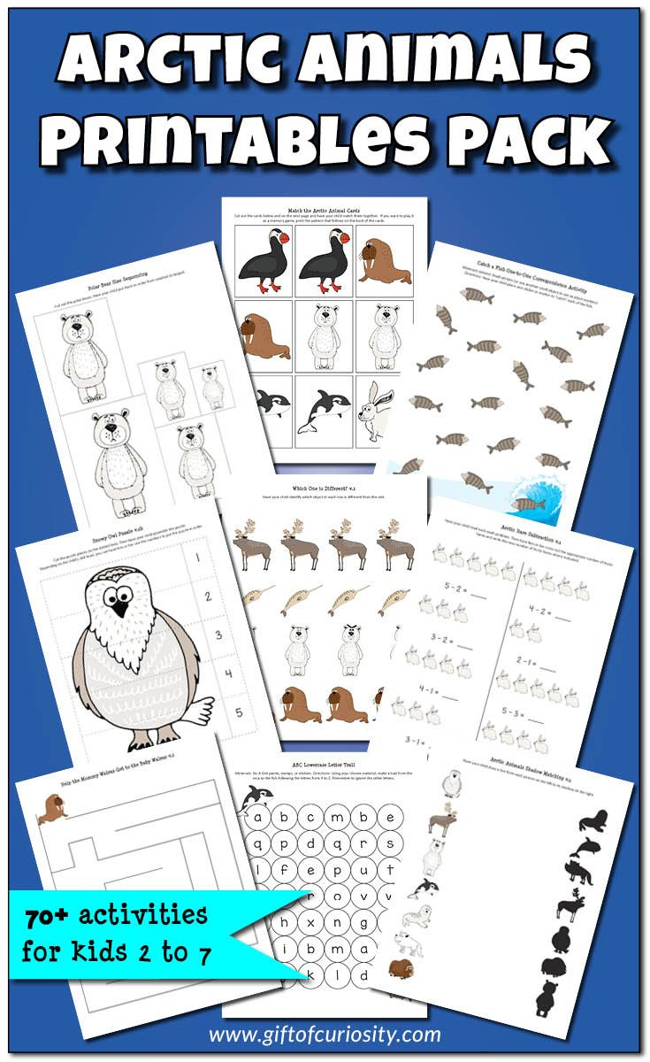 Arctic Animals Printables Pack With More Than 70 Arctic Animal Activities For Kids Animal Activities For Kids Arctic Animals Printables Arctic Animals [ 1200 x 735 Pixel ]