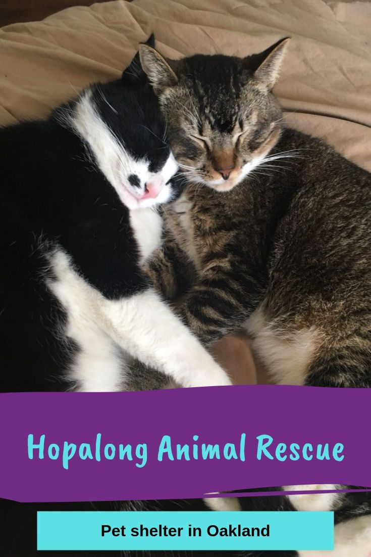 14++ Second chance animal rescue images