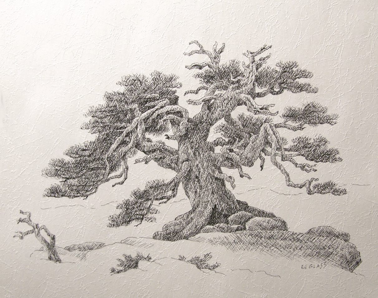 """Old Tree Drawing Details about E E Glass """"Ancient Tree"""