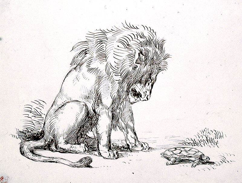 Lion with a Turtle