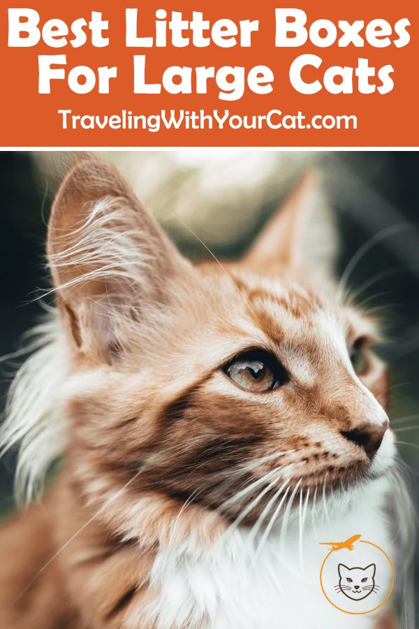 Best Litter Boxes for Large Cats Best litter box, Best
