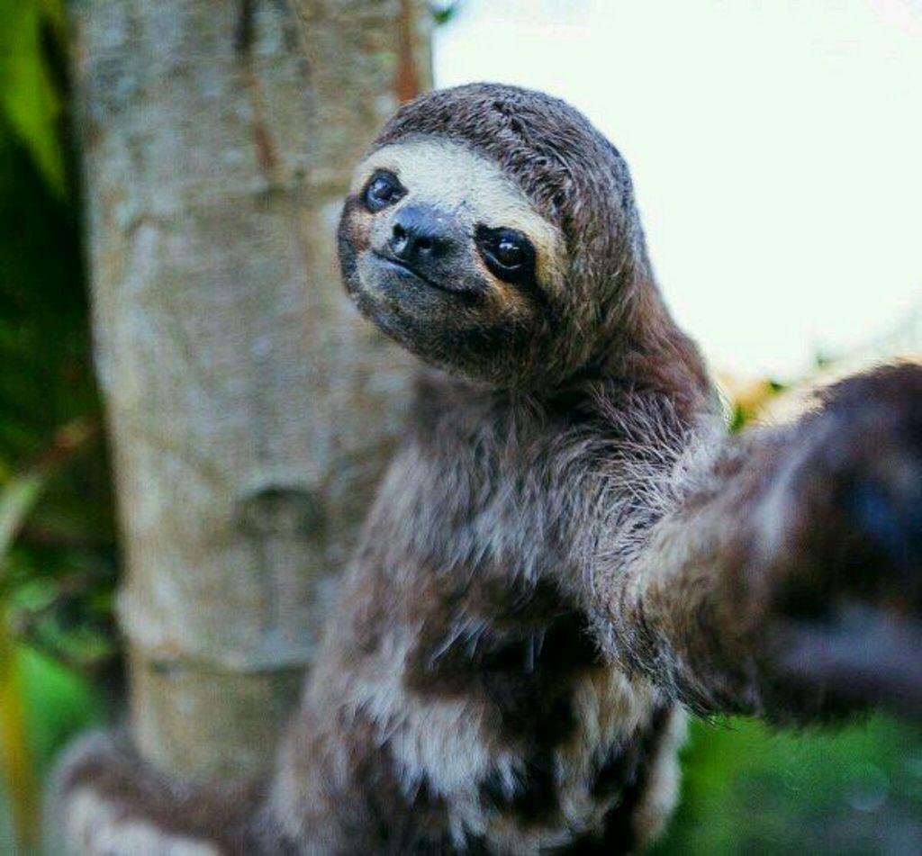 24 selfies d'animaux, tellement drôles qu'on ne se lasse pas de les revoir !