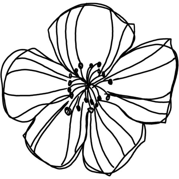 Natali Design Apple Doodle1 Png Liked On Polyvore Featuring Fillers Flowers Doodles Backgrounds Decorations Quotes Doodle Images Flower Drawing Drawings