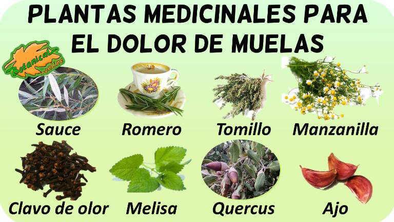 Tratamiento Natural Para El Dolor De Muelas Botanical Online Dolor De Muela Plantas Medicinales Hierbas Curativas