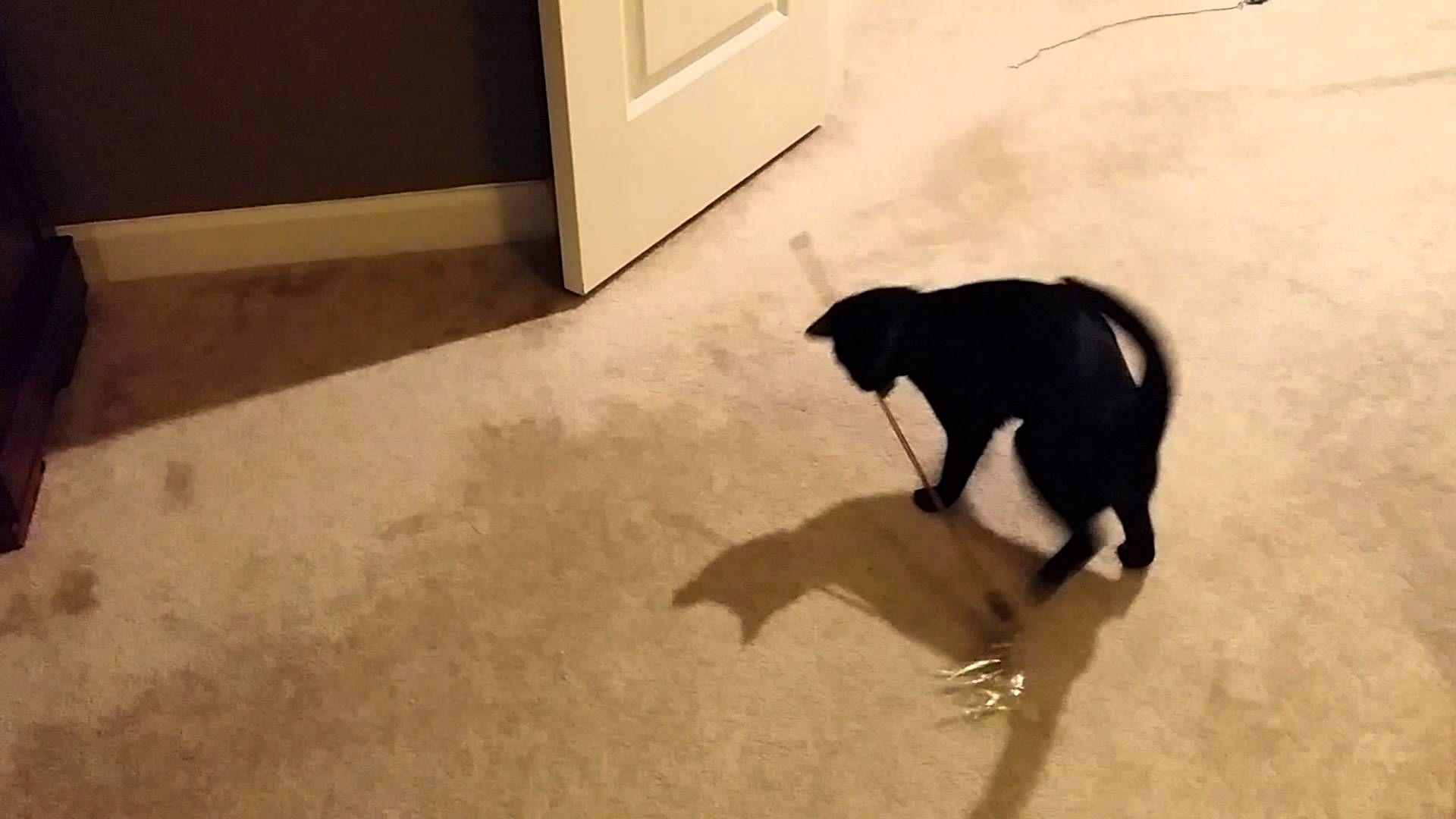 Jade Twirl Twirling Jade Kitten