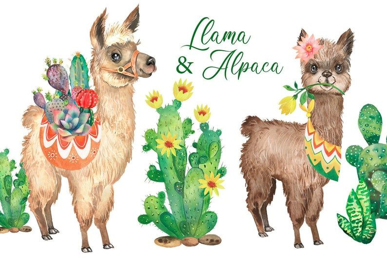 Llama Clipart Watercolor Llama Alpaca Cute Animal Cactus Printable Art Png In 2021 Llama Clipart Kids Clipart Animal Clipart
