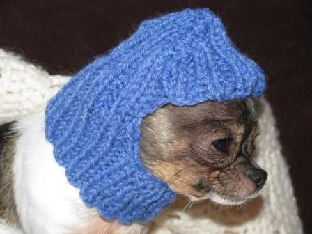 Knitdoghatpattern Free Crochet Dog Hat Pattern Crochet