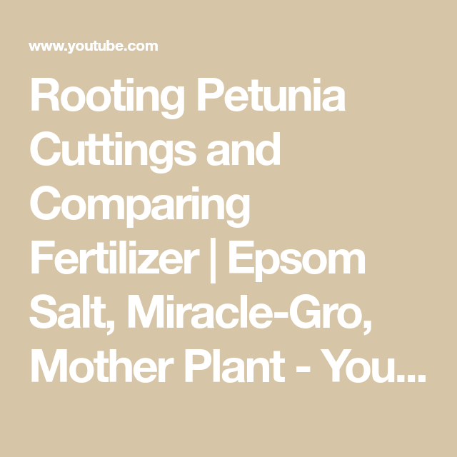 Rooting Petunia Cuttings and Comparing Fertilizer | Epsom Salt, Miracle-Gro, Mother Plant - YouTube