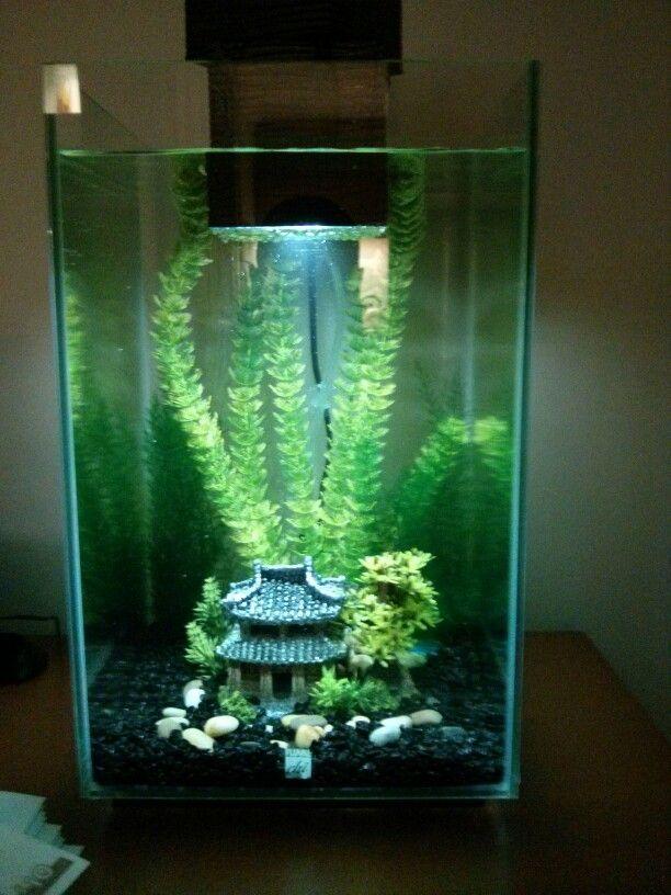 fluval chi set up3 aquarium ideas aquarium betta. Black Bedroom Furniture Sets. Home Design Ideas