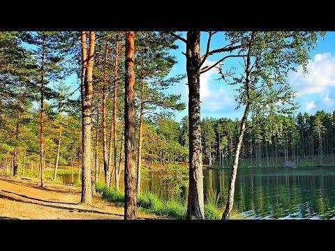 Rússia Selvagem: As Florestas Secretas [Dublado] Documentário National Geographic - / Wild Russia
