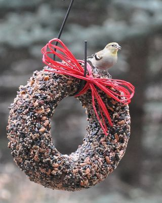Even Great Feeders Are Second Best To Natural Foods For The Birds Wild Birds Unlimited Wild Birds Birds
