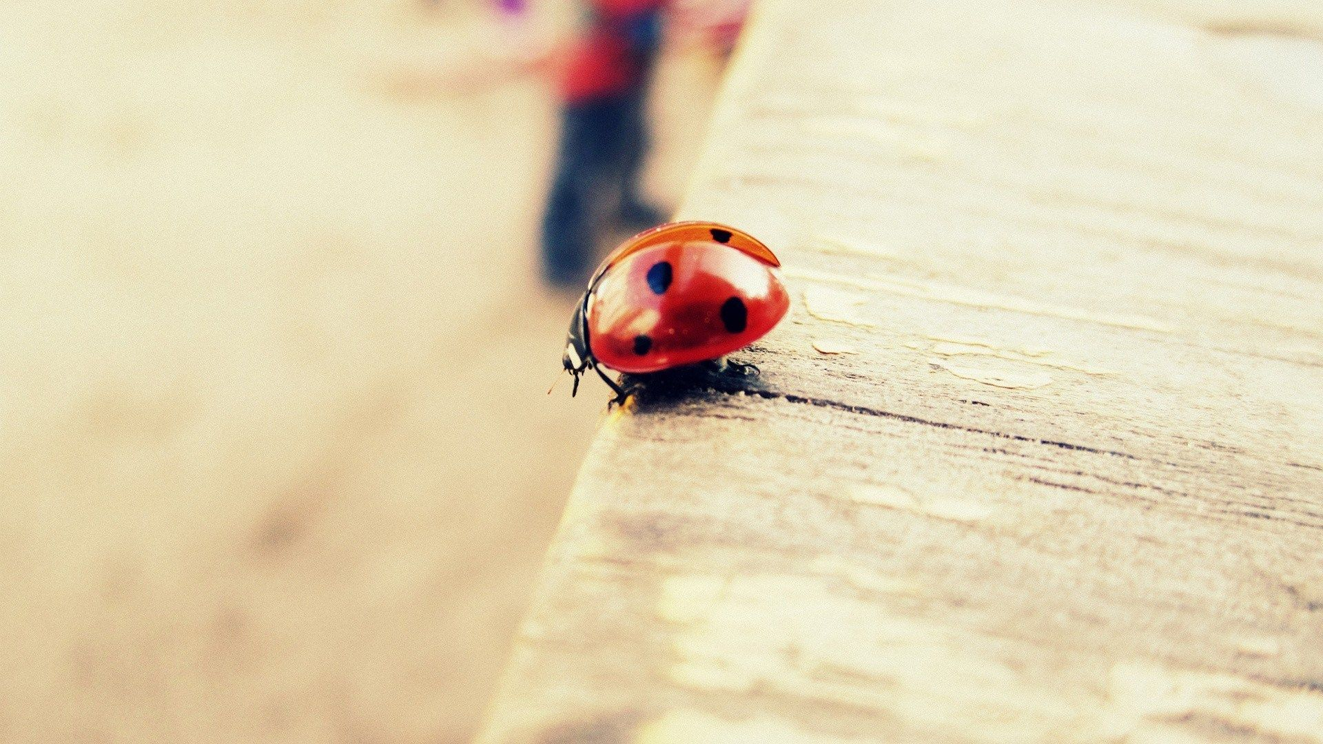 insect ladybird macro | animals | pinterest | insects and animal
