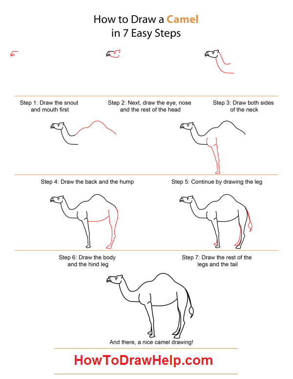 How To Draw A Camel Flavs Will Certainly Need Is As A Newborn