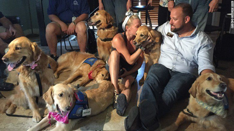 Cnn On Therapy Dogs Quiet Dog Breeds Dogs