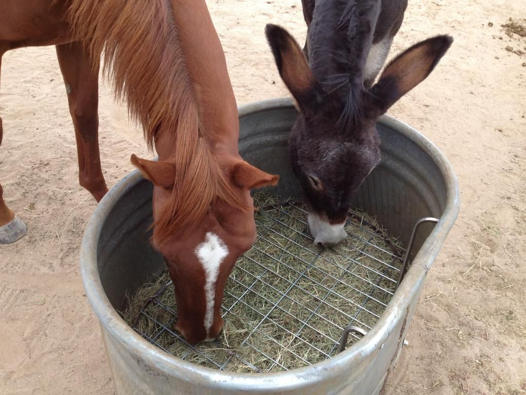 feeder part feeders slow hay goats kiko farm generation deux