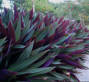 Semi Tropical Landscape
