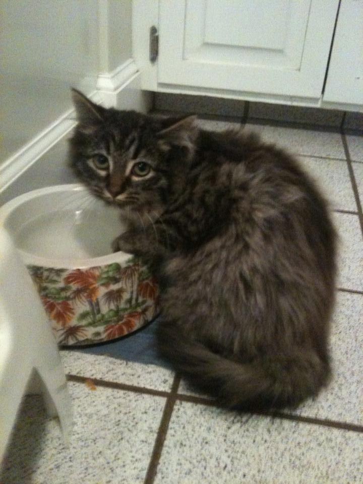 Optionssharesend Mobile Uploads Crista Castonguay Drozdenko May 19 Near Bristol Ct Missing Pet Alert Our Very Timid Indoor C Indoor Cat Lost Cat Cats