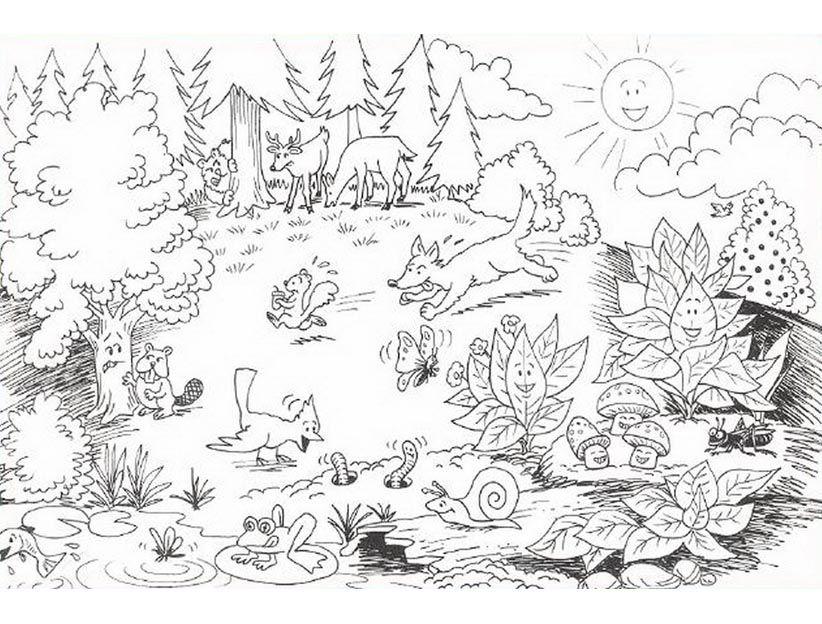 картинка леса распечатать прочим