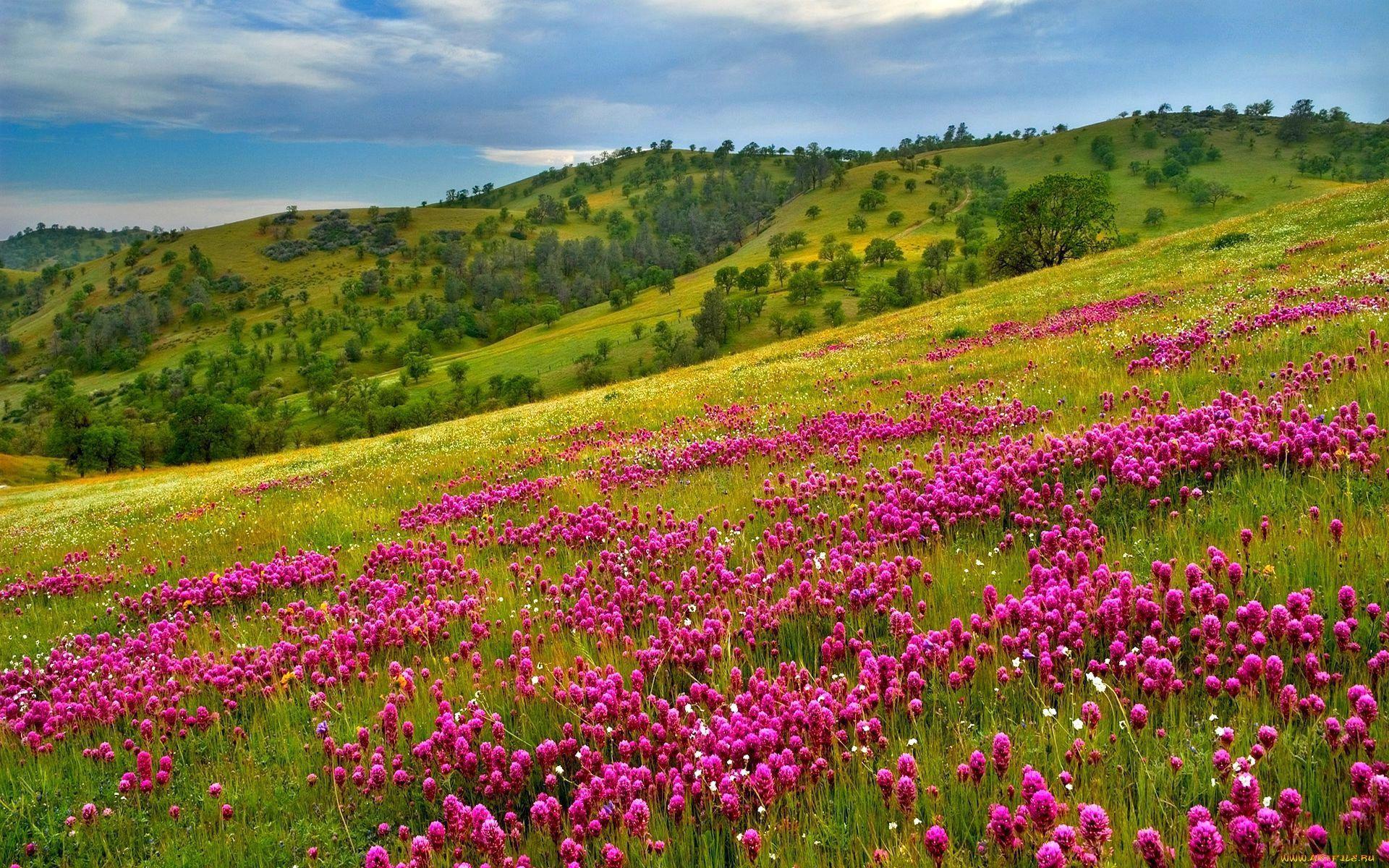 неприятно, фото цветущих полей и лугов одна