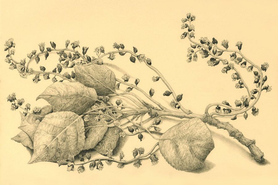 Popolar's leaves by AldemButcher on DeviantArt