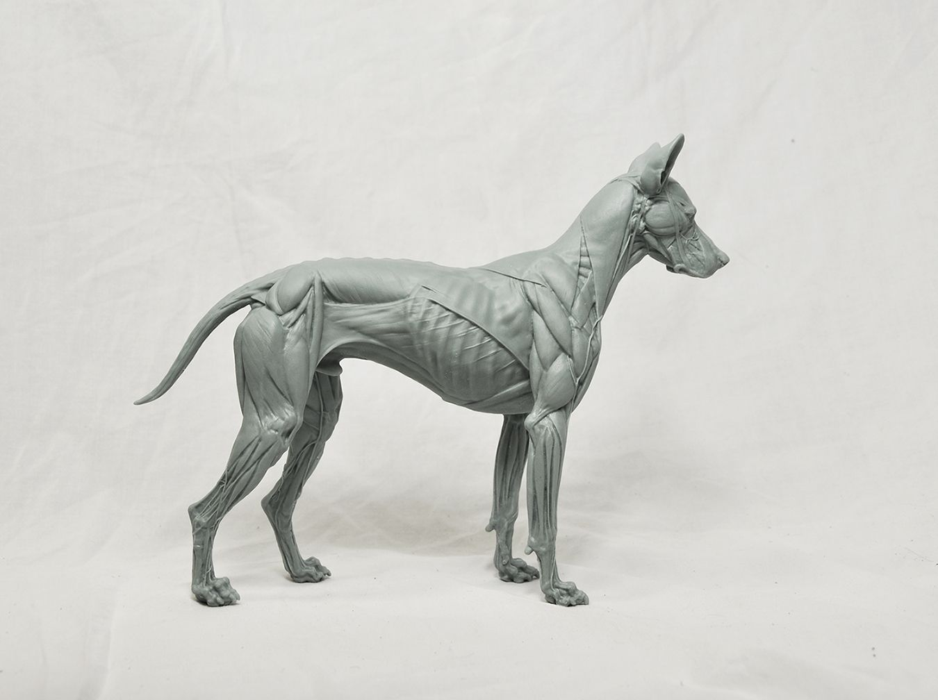 Perfect 3d Canine Anatomy Software 1.1 Free Download Pattern ...