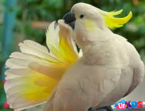Best Pet Birds For Kids Best Pet Birds Pet Birds Birds For Kids