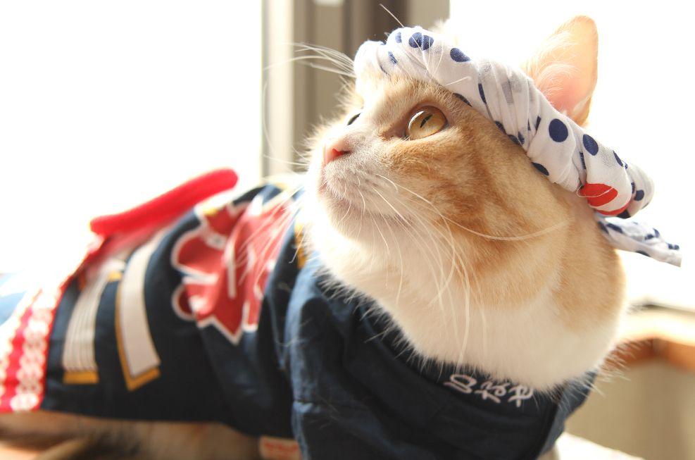 ねじり鉢巻きをコーディネート お祭り具合がいや増します かわいい猫 かわいいカエル キュートな猫