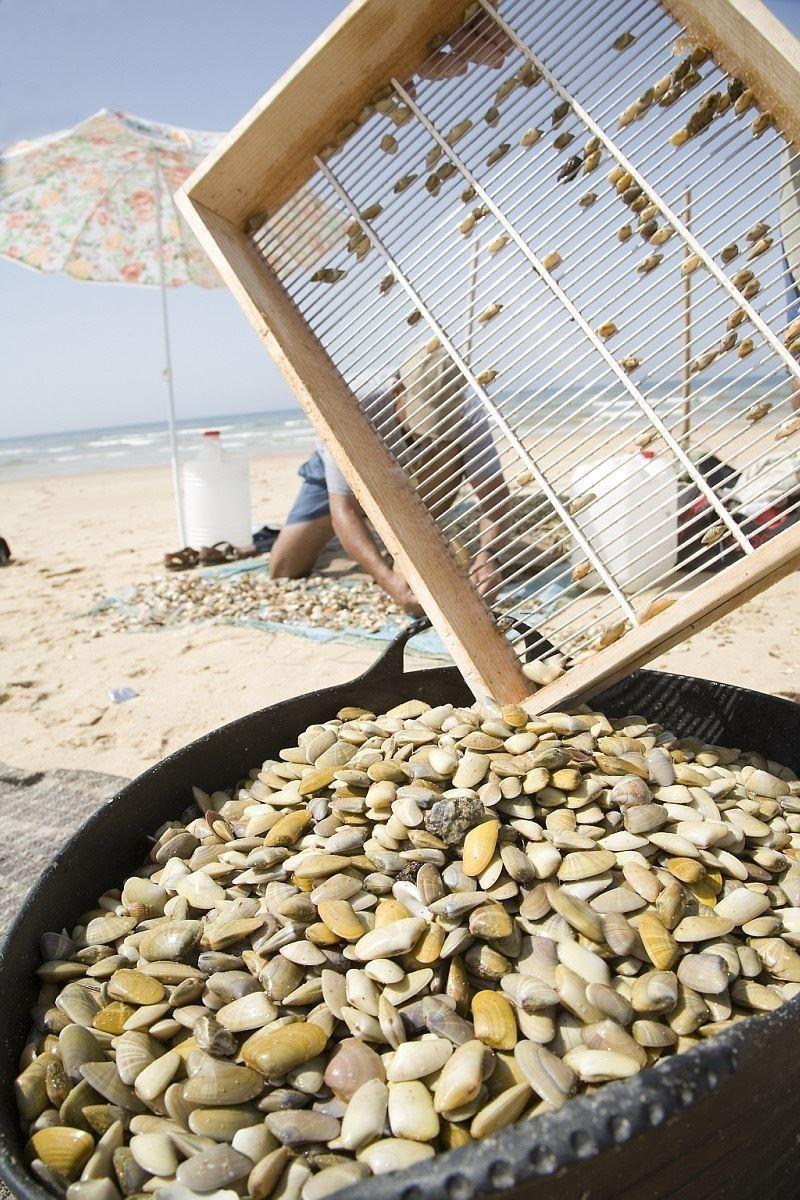 Abren al marisqueo de coquinas Matalascañas y Doñana al desaparecer las biotoxinas http://www.rural64.com/st/turismorural/Abren-al-marisqueo-de-coquinas-Matalascanas-y-Donana-al-desaparecer-la-5432
