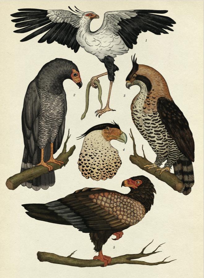 Pingl par axis mundi sur animals animaux en 2019 ilustraciones de animales dibujos de - Coloriage petit scientifique ...