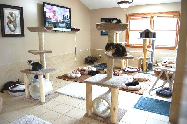 cat room they dont need a tv haha - Cat Room Design Ideas